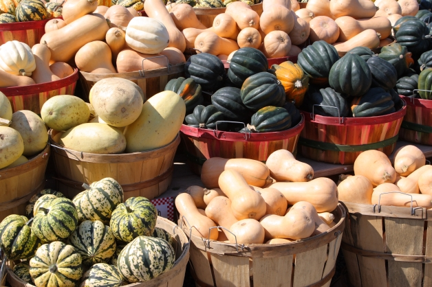 All kinds of winter squash to choose from.