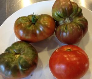 My backyard tomatoes- Black Krim and Matina
