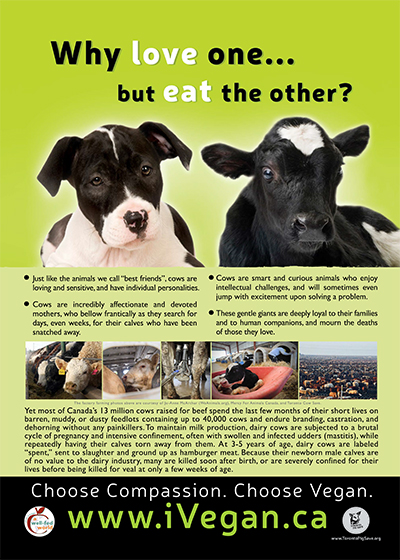 vegetarian-1why_love_one_poster_cow_400