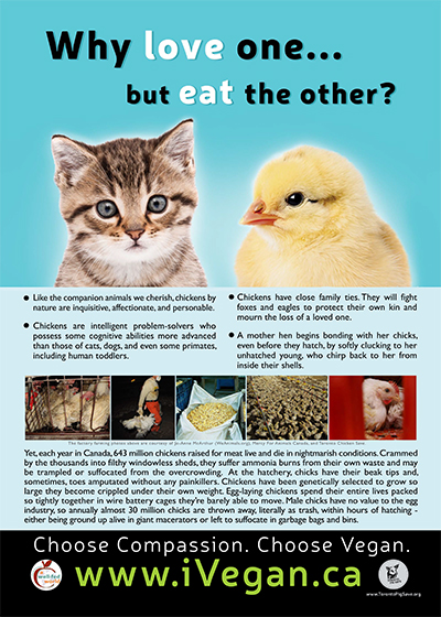 Vegetarian-why_love_one_poster_chicken_400